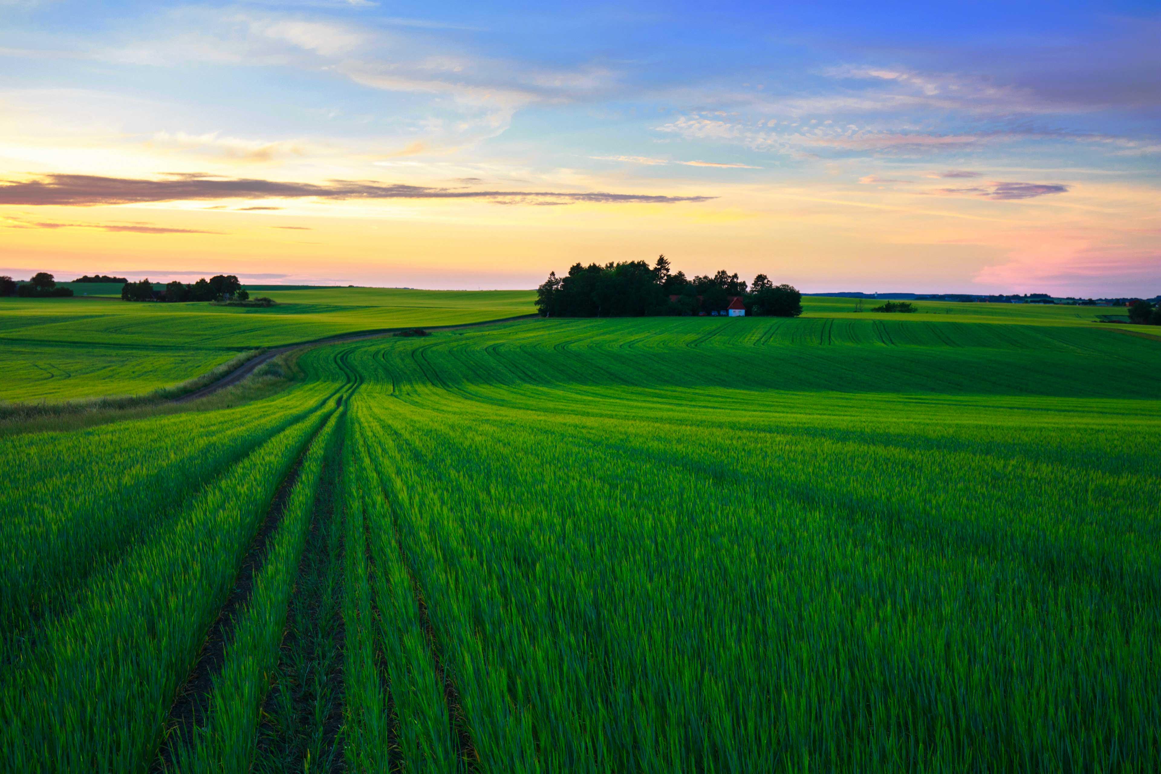 Stor grönt fält i solnedgången