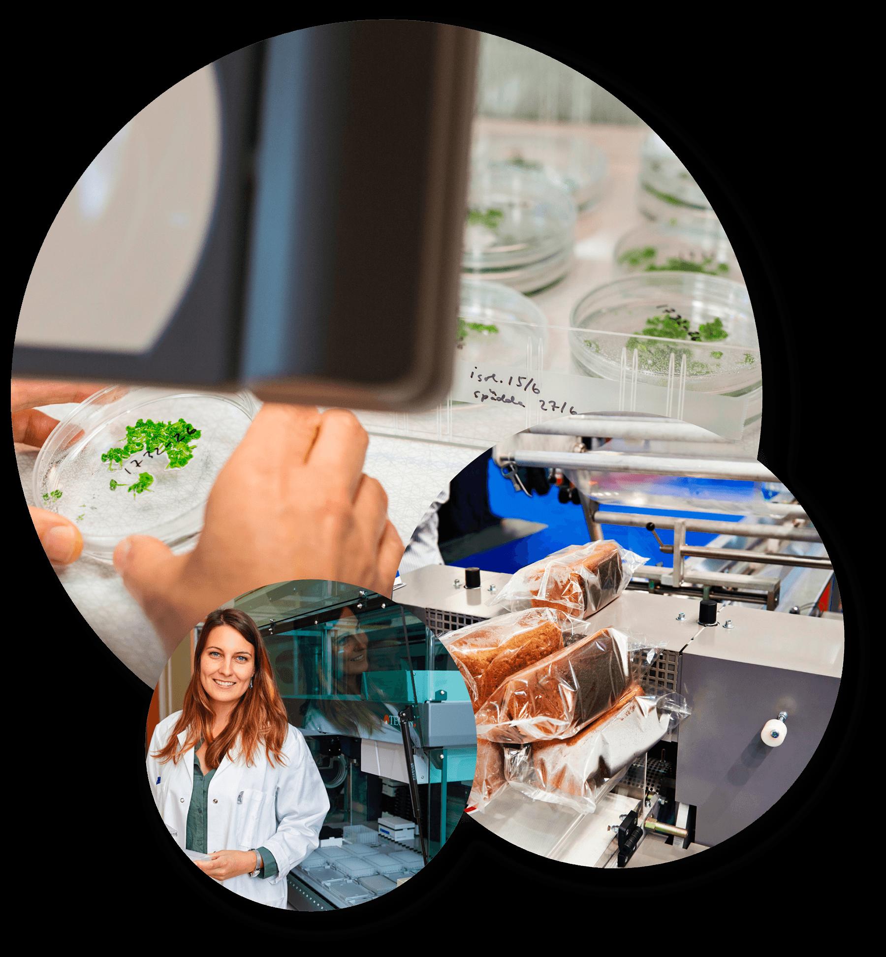 Analys i ett labb, kvinna med labbrock samt bröd i plastpåsar på en fabrik
